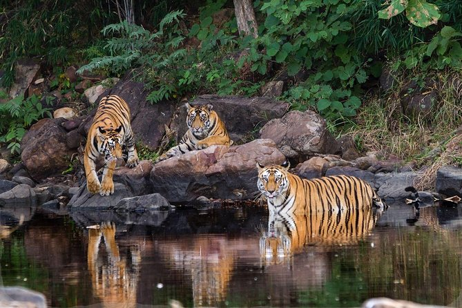 Khajuraho Day Tour: Jungle Safari at Panna National Park with Khajuraho Temple