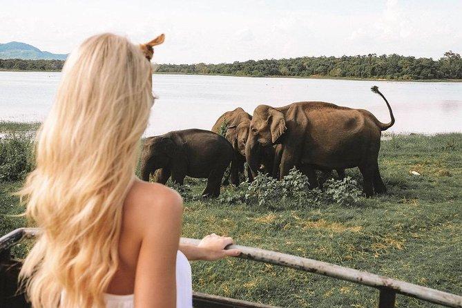 Minneriya National Park Private Jeep Safari