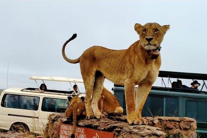 Nairobi Highlights:Giraffe ,Elephant Orphanage ,National Museum & Kazuri Beads