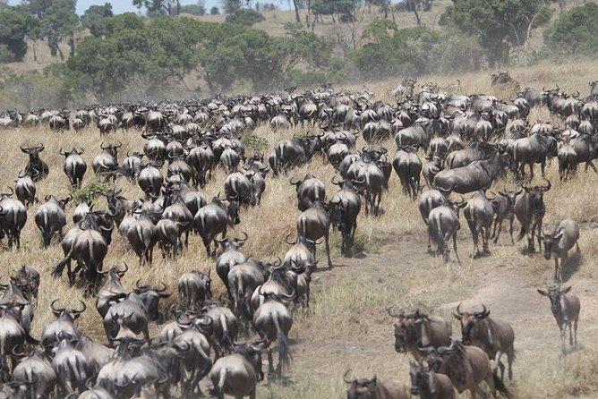 10 Days Wildebeest Migration Safari