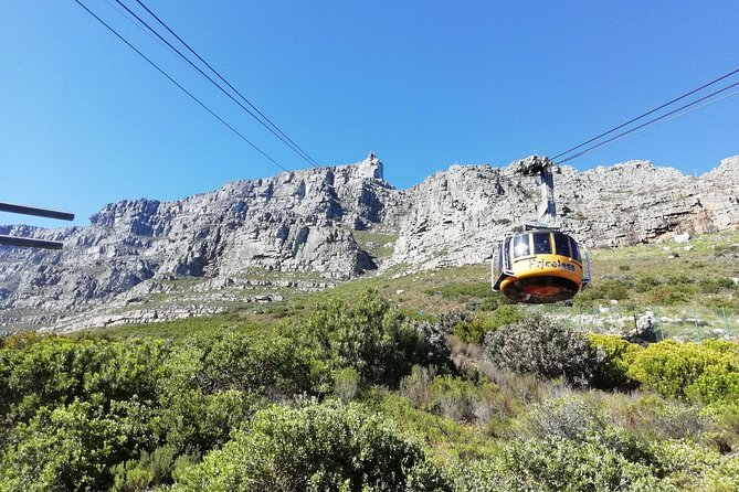 Full-Day Table Mountain, African Penguins and Wine Tasting Tour from Cape Town