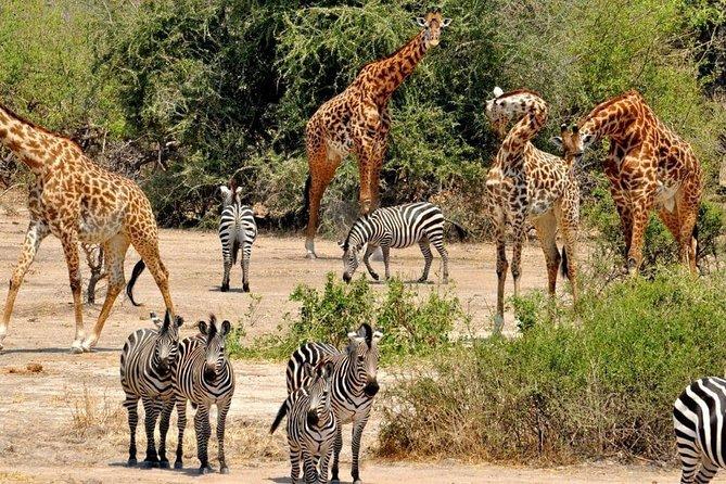 8 Days Tanzania southern circuit safari