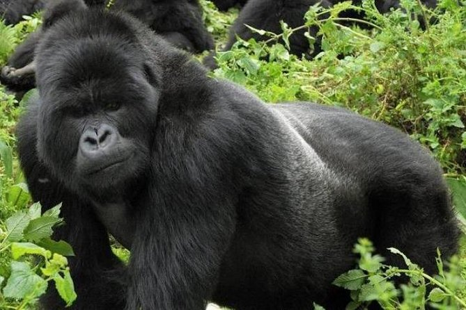 6 Days gorillas and chimps safari in Uganda photo 4