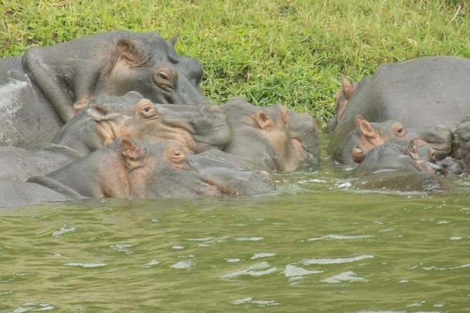 6 Days gorillas and chimps safari in Uganda photo 3