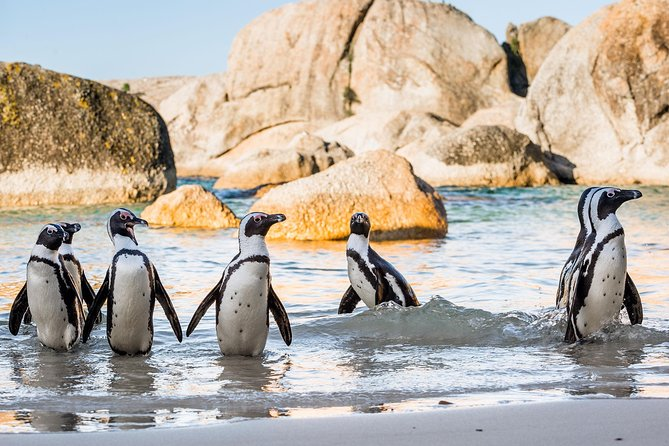 Cape Of Good Hope and Penguins Full Day Guided Small Group Tour from Cape Town