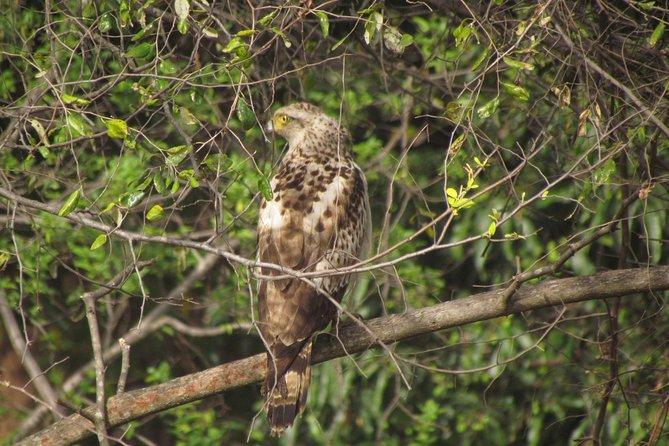Bird Watching Around Mumbai - BPS