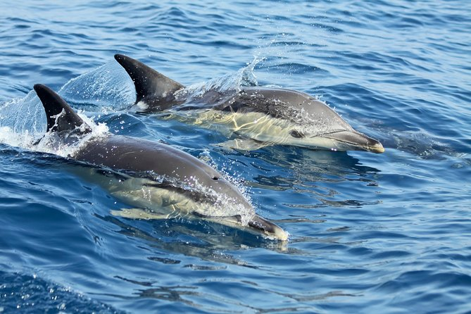 Small-Group Dolphin Watching in Lisbon