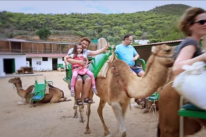 Camel Ride in Arteara Park (South pickup Only) photo 4