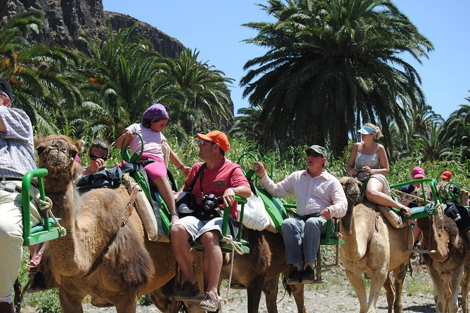 Camel Ride in Arteara Park (South pickup Only)