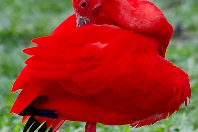 Yerette Home of the Hummingbird and Caroni Bird Sancturay