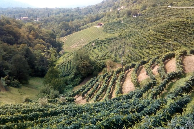 Prosecco experience. Wine tasting. Full day