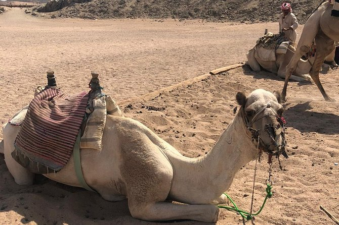 Polaris Desert Buggy with Camel Ride (3 Hours) - Hurghada photo 24