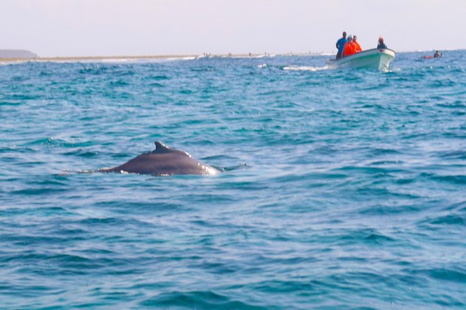 Dolphin tour + Jozani Forest + Paje Beach Tour