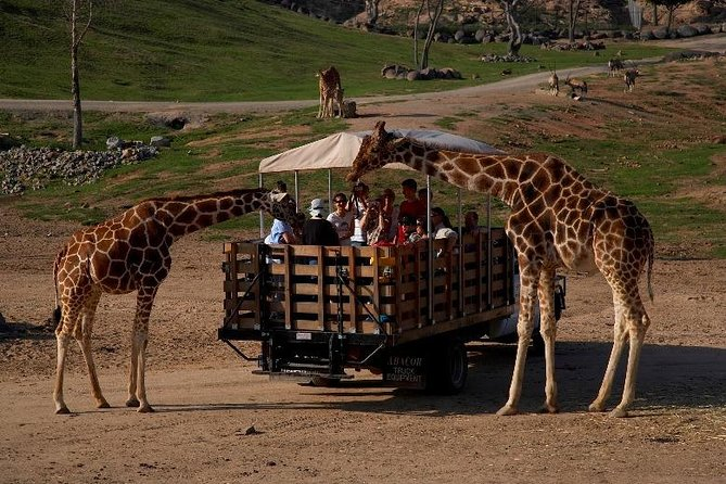 San Diego Animal Park Private Transfer From Orange County.