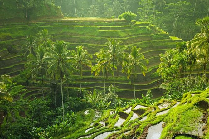 Ubud Instagram Spots Tour - One Day Private Trip