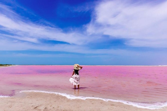 Las Coloradas, the World of Flamingo