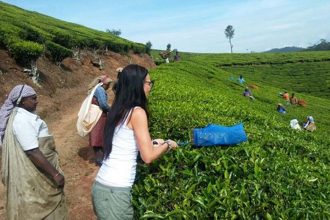 Make Your own Tea In Munnar