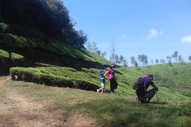 Make Your own Tea In Munnar