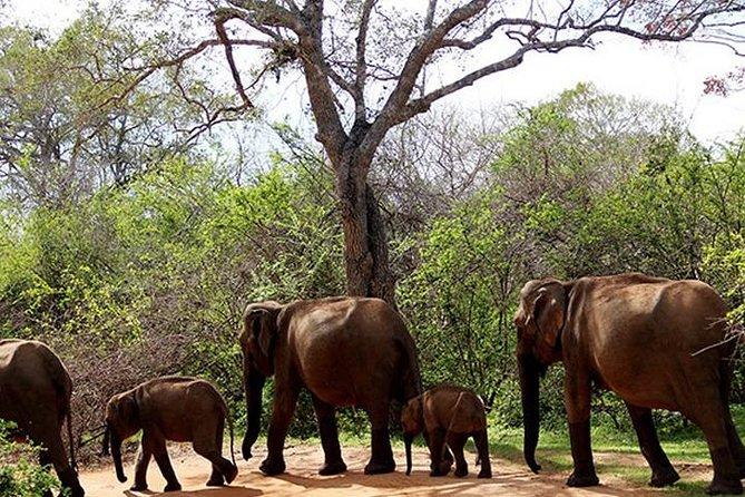 Yala Safari Tour 2 nights 3 days