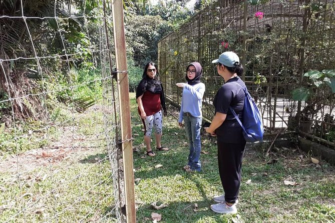 Orang Utan Island Perak Day Tour (Private)