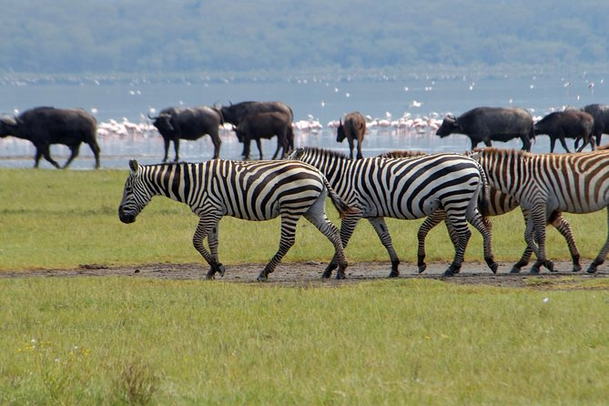 2 days lake Bogoria and lake Nakuru flamingos guided tour from Nairobi photo 7