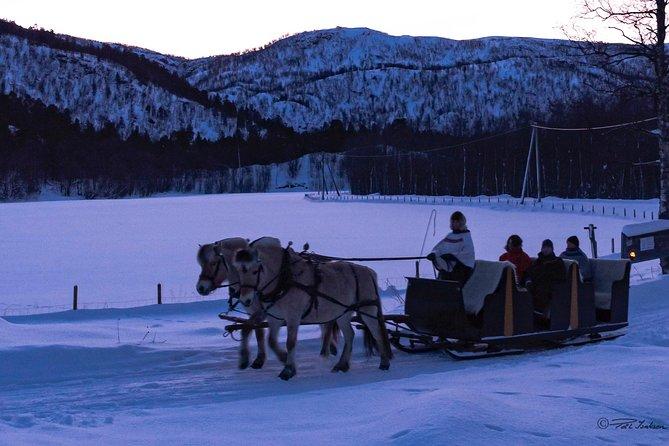 Sleigh Ride w/ snacks - Experience Arctic Farm Life