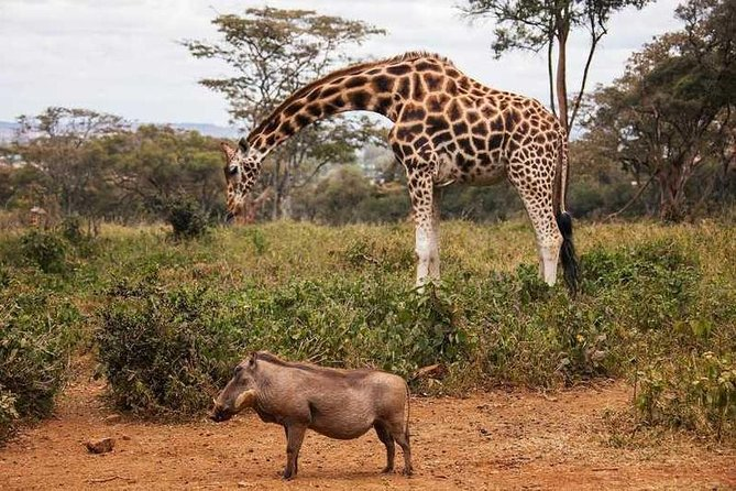Giraffe Center, David Sheldrick Orphanage & Kazuri Bead Factory Half-Day Tour