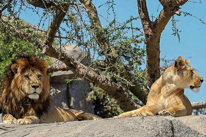 9 Days Tanzania Safari Adventure