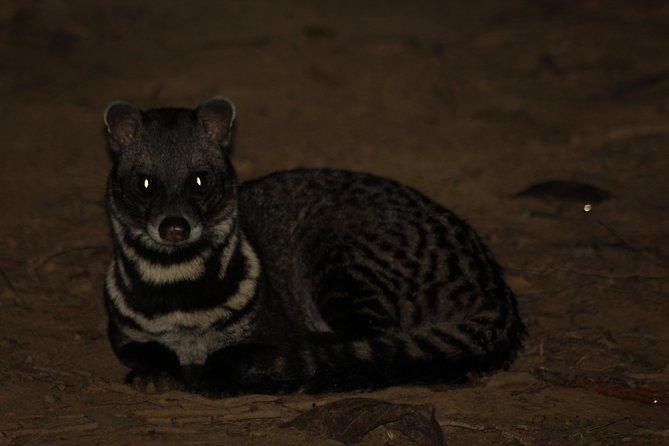 Borneo 4 Days 3 Nights Tanjung Bulat Jungle Camp Combo Sandakan