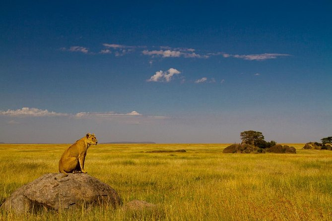 Private Safari for Solo Traveler ~ 7 Days