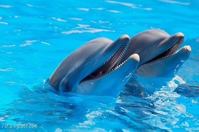 Cheap trip: a dolphin trip in Hurghada.