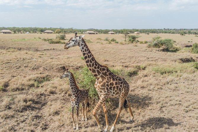 3 Days Mikumi and Udzungwa Safari