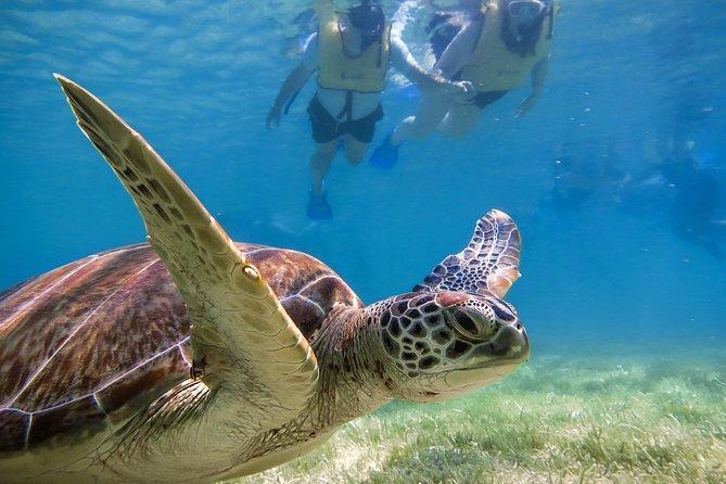 Turtles Express