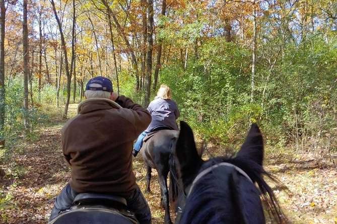 Friesian Herd Tours, Workshops, Classes and Retreats in the Kettle Moraine area. photo 4
