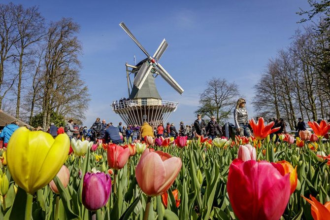 Private Taxi Transfer from The Hague to the Flowerfields in Lisse (incl.tickets)