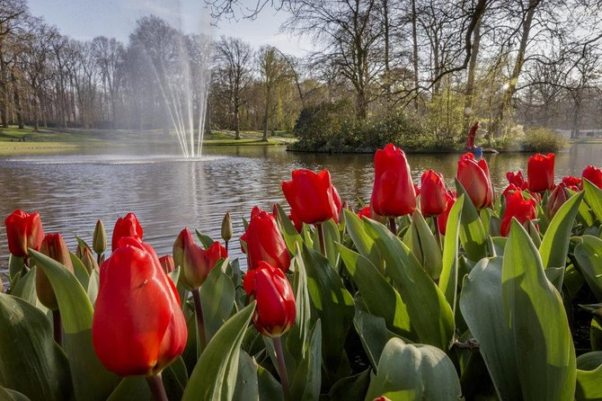 LXRY Private (Guided) Tour Keukenhof (4hrs)