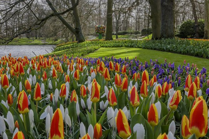 Lxry Private Transfer from The Hague to the Flowerfields in Lisse (incl.tickets) photo 7