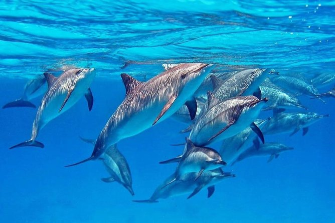 Full Day Dolphin House Snorkeling Sea Trip & Water Sport - Hurghada
