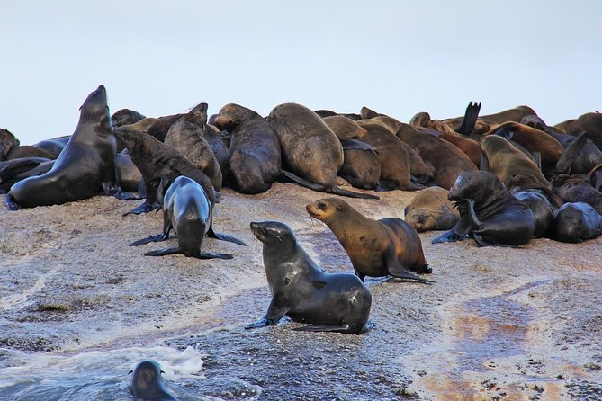 Cape of Good Hope Sightseeing and Penguins Full Day Tour From Cape Town photo 25
