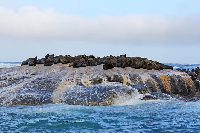 Cape of Good Hope Sightseeing and Penguins Full Day Tour From Cape Town photo 12