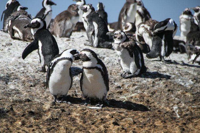 Cape of Good Hope Sightseeing and Penguins Full Day Tour From Cape Town photo 31