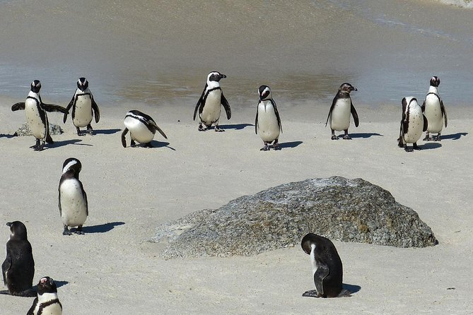 Cape of Good Hope Sightseeing and Penguins Full Day Tour From Cape Town photo 13