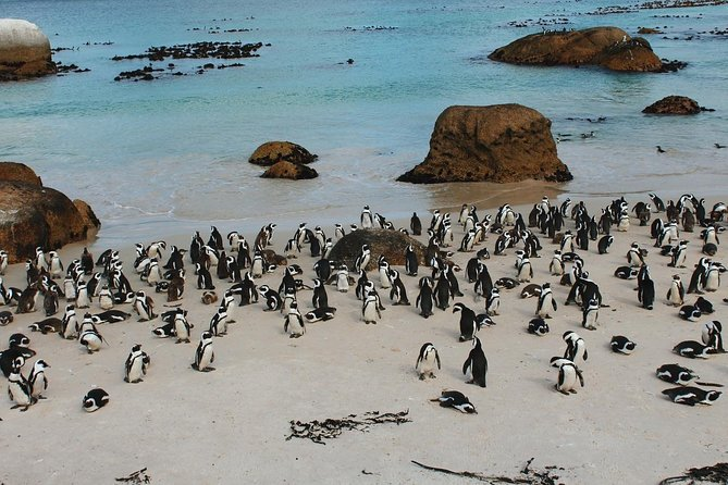 Cape of Good Hope Sightseeing and Penguins Full Day Tour From Cape Town photo 8