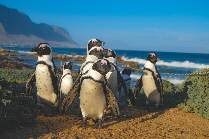Cape of Good Hope Sightseeing and Penguins Full Day Tour From Cape Town photo 30