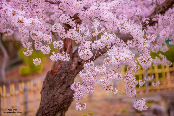 Spring Blossom Tour to Hunza Valley Pakistan
