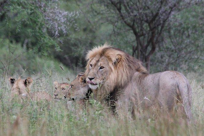 3 Days Masai Mara Group Joining Safari - Departs Daily from Nairobi