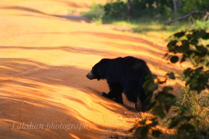 Safari at Wilpattu National Park from Negombo (All inclusive day tour) photo 14