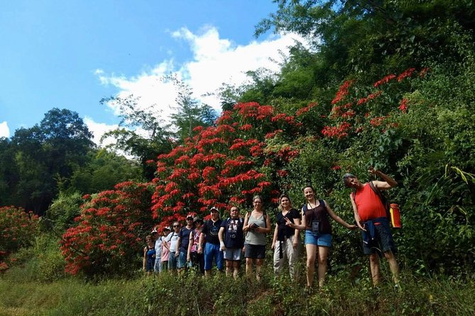 2 DAYS 1NIGHT Jungle Trek in Huay Nam Dung National Park
