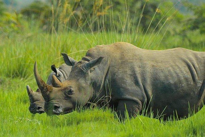 Wildlife Safari, HuguenotTunnel and Wine Testing