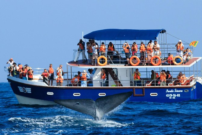 Whale Watching In Mirissa From Negombo